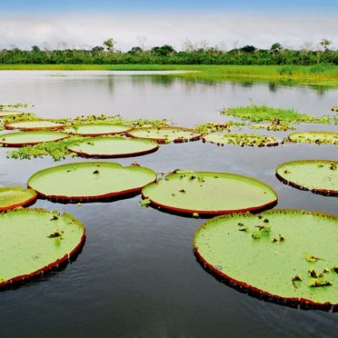 day02-giant-water-lilies-latin-excursions