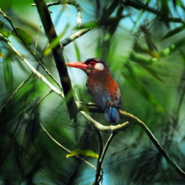 day03-woodcreeper-latin-excursions