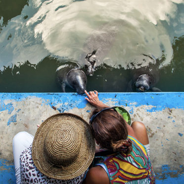 day04-baby-manatees-latin-excursions