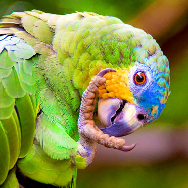 day05-parrot-clay-lick-latin-excursions