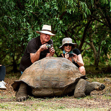 Models with Galapagos Giant Tortoise